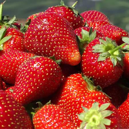 Valor Nutricional de la Fruta Frutilla